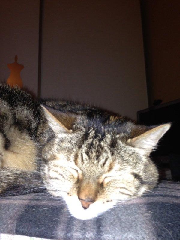 Quand on ce fait chier !!! Même le chat s'endorme !!!