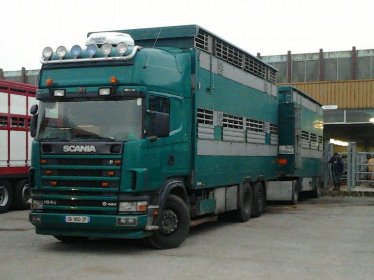 Beau Scania Vert R480 Mes connais pas Son Entreprise si vous savez Dite moi Merci  !! Belle Bétaillère Encore au Forail
