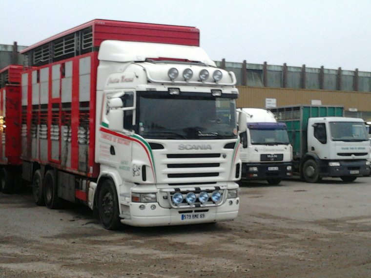 Scania Blanc R560 De Commerce De Bestiaux Vraiment pas Mal Cette Bétaillère !! Encore au Forail