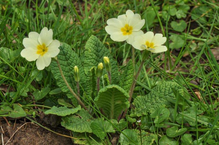 Primev re nature gastronomique et m dicinale for Entretien jardin printemps