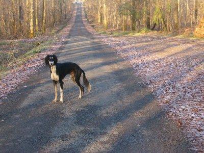 Novembre 2008: Promenade en forêt haut-marnaise
