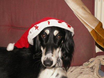 Joyeux Noël et bonne année 2009!!