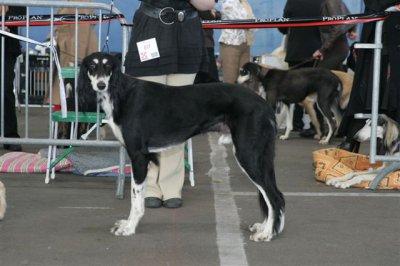 05/04/2009 Nationale d'élevage à Vierzon (18)