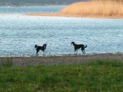Mars 2011: petite ballade au bord de l'étang du puits