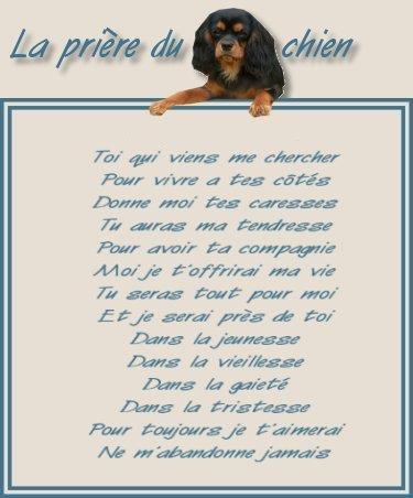 LA PRIERE DU CHIEN.