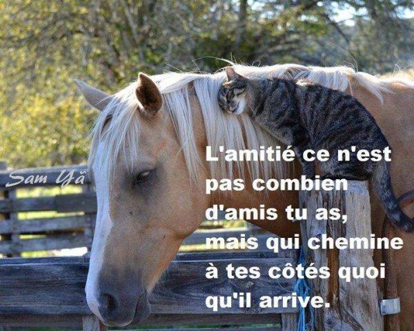 L'AMITIE.