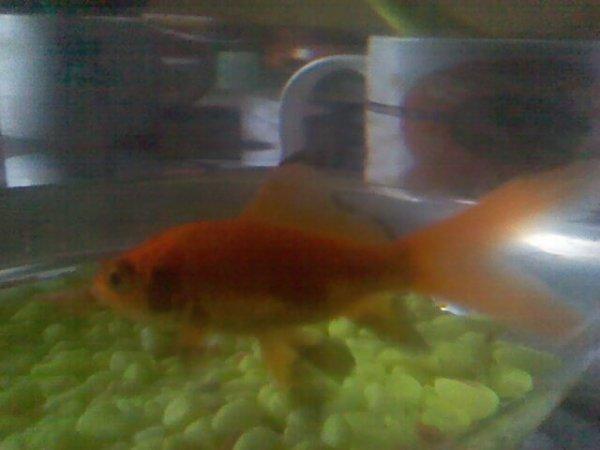 Maurice mon  poisson  :p