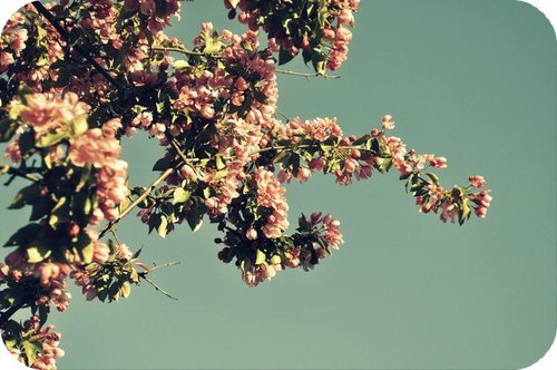 1●   Bonjour / Bonsoir:Bienvenue dans mon blog :)