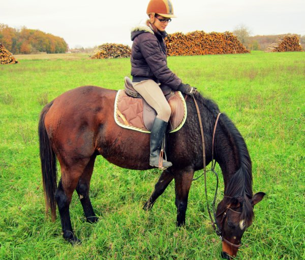 Même les chevaux retirés des courses on droit au bonheur !