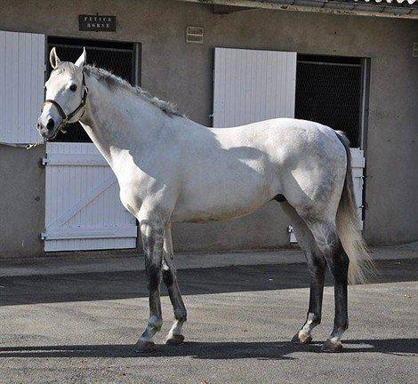 Des chevaux qui ont besoin d'amour autant que les autres..