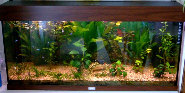 Blog de 62guppy62 page 8 62guppy62 for Fish tank full movie