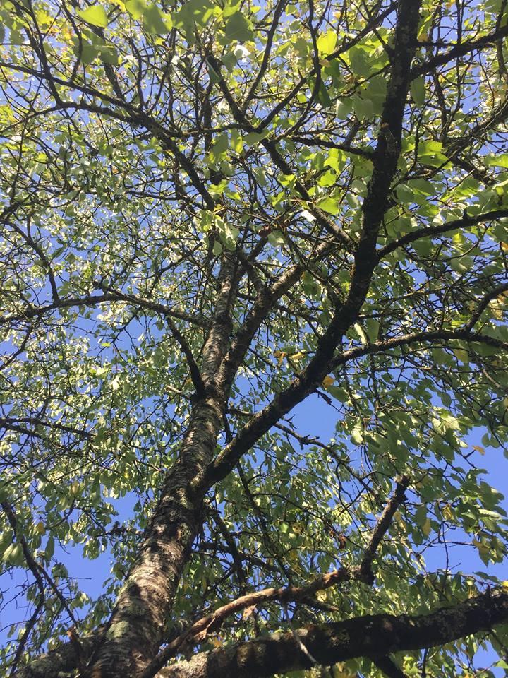 """""""Auprès de mon arbre, je vivais heureux...."""""""