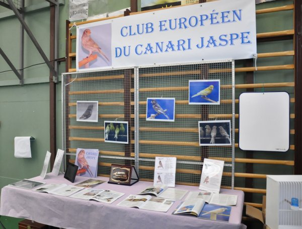 LES JASPES PRESENTS A L'EXPO DU CINQUANTENAIRE DU CLUB DE BORDEAUX