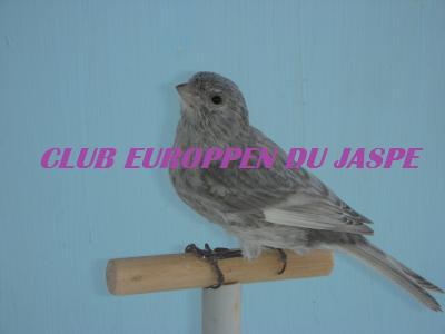 Blog de club-europeen-du-jaspe