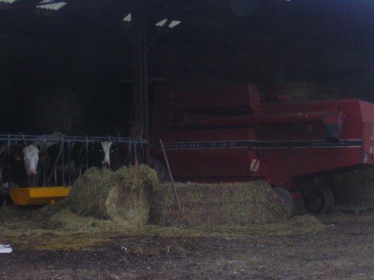 dans une ferme