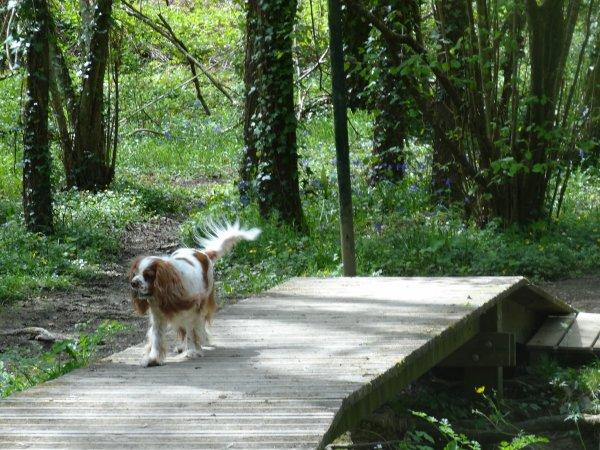 Ballade lundi de Pâques en forêt