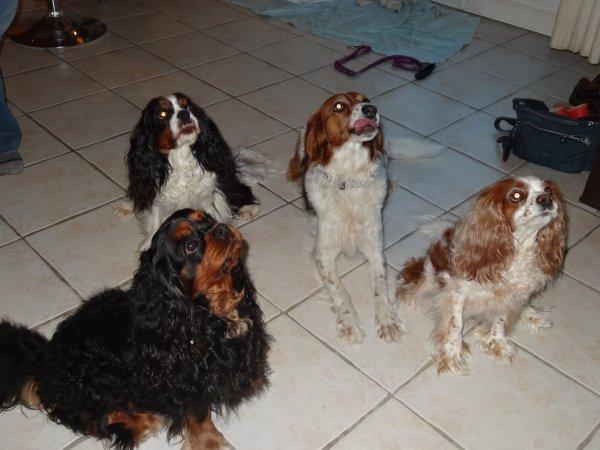 Des amis sont venus manger à la maison hier soir avec leur chienne :)