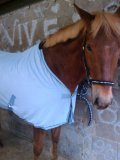 Photo de Horse-Krunch