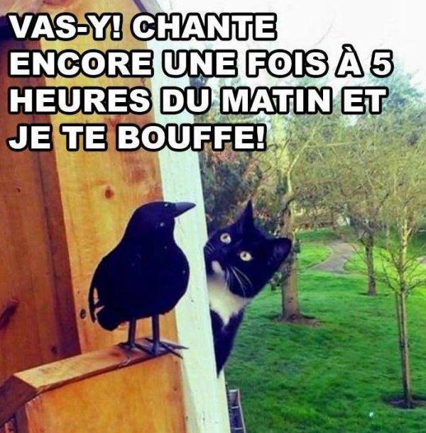 HUMOUR AVEC LES CHATS !