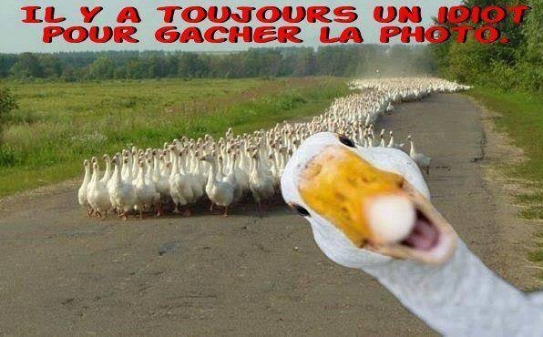 HUMOUR ... TOUJOURS !