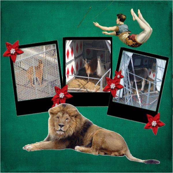 zoo du cirque