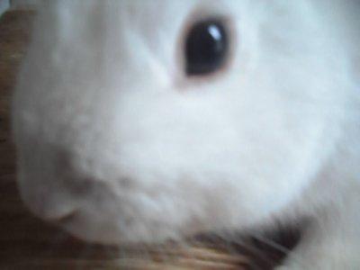♥ma boule de poile blanche♥
