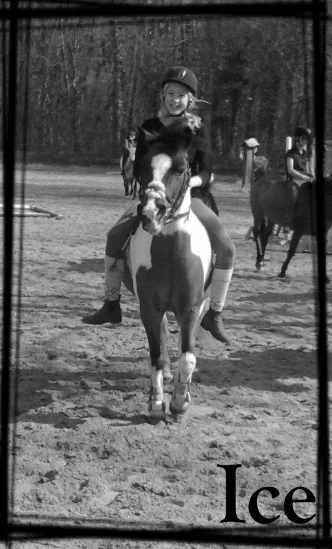 ~ L'air du Paradis est celui qui souffle entre les oreilles d'un cheval ~