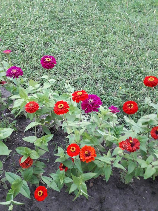 Fleurs dans notre jardin