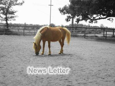 2# Présentation du blog & News Letter