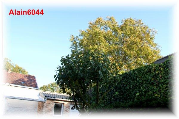 Petite photo faite ce matin de mon jardin...!