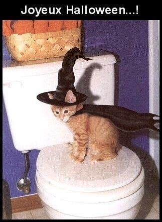 Bonne fête d'Halloween à tous et toutes....!