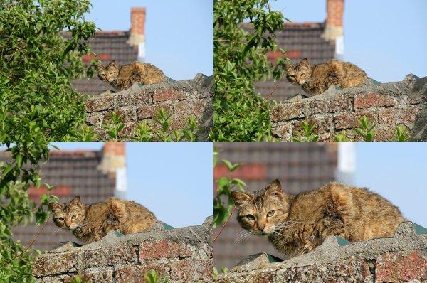 Quand le chat de la voisine prend un bain de soleil....!