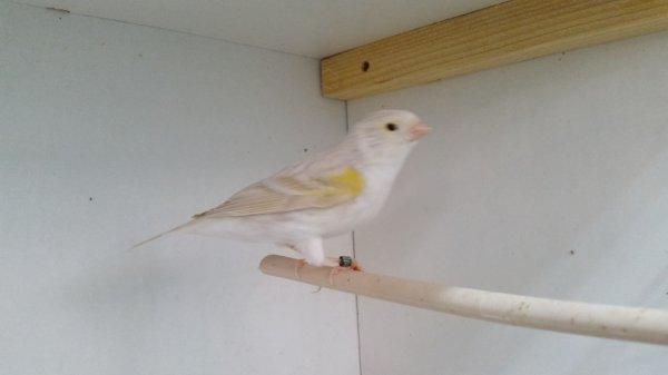 isabelle satiné mosaique jaune