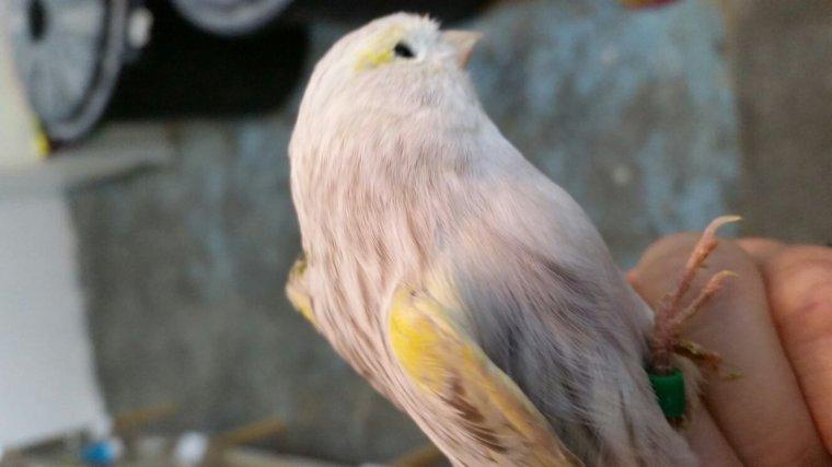 Agate pastel mosaique jaune