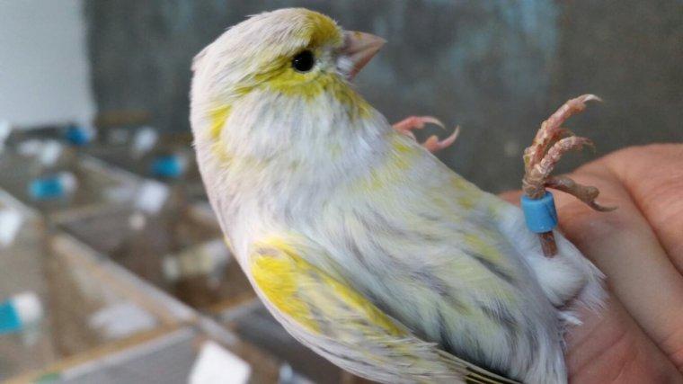 Agate opale mosaique jaune