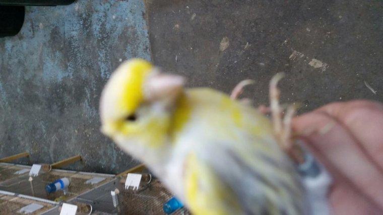 Agate topaze mosaique jaune