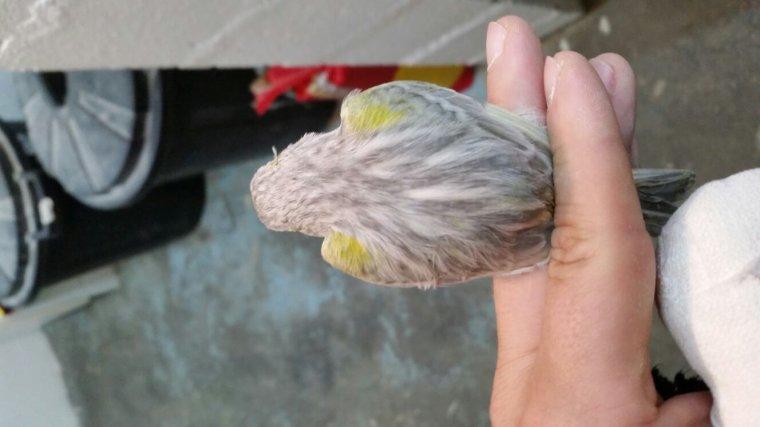 Agate jaspe mosaïque jaune