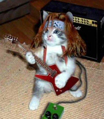 cat music freestyle