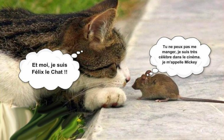 """Résultat de recherche d'images pour """"chat humour"""""""
