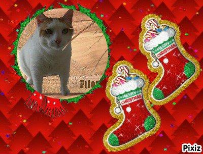 Merci Anne 'itouany) bon Noël.....Caresses à tes poilus!!