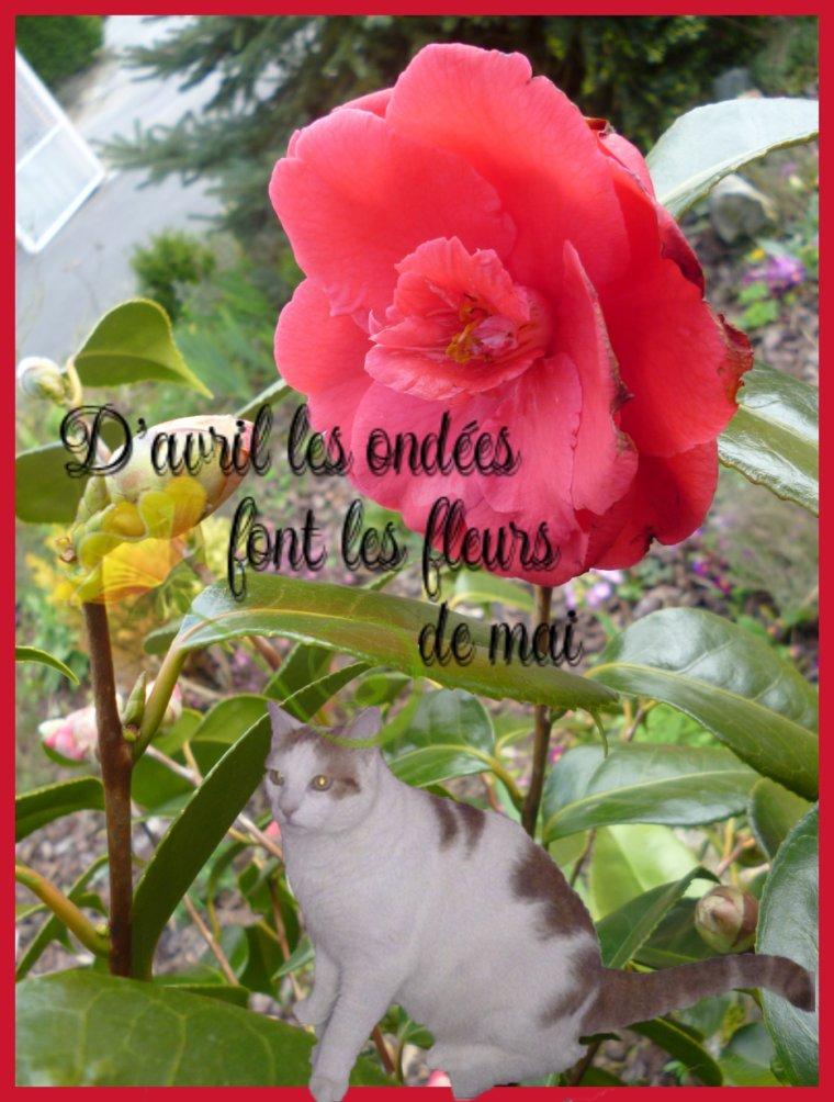 En espérant que vous allez toutes et tous trés bien et que vous êtes en forme...Je vous souhaite de trés bonne journée dans la Paix et le Bonheur!!♥