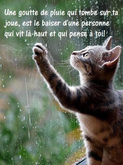"""« En te levant le matin, rappelle-toi combien précieux est le privilège de vivre, de respirer, d'être heureux. » De Marc Aurèle 🎀¸.•*`*•.¸💜¸.•*`*•.¸🎀¸.•*`*•.¸💛¸.•*`*•.¸🎀¸.•*`*•.¸❤¸.•*`*•.¸🎀 """"Merveilleuse journée à vous…"""""""
