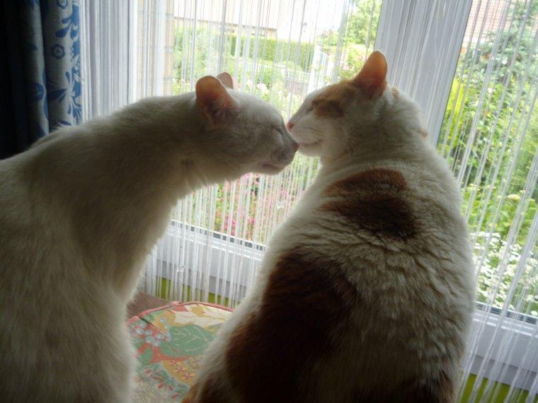 ♥♥ Bonne fête aux chats ....c'est la Saint felix...♥♥