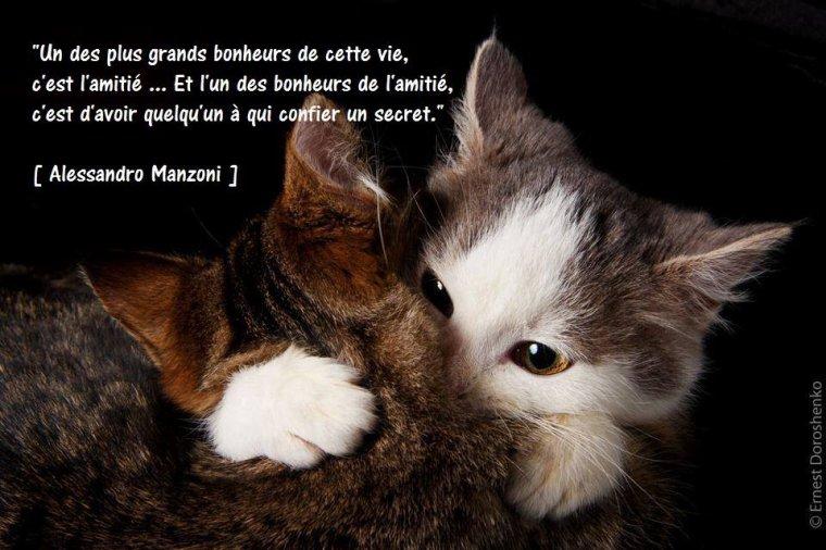 Chalut de Filou et Bizouilles de grand-Mère ....