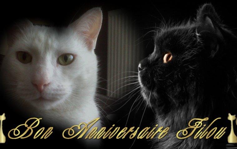C'est ton Anniversaire mon Loulou .....11 ans  tu nous donnes tant de Bonheur .....