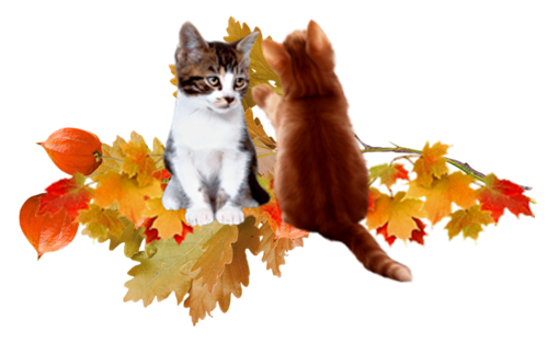 Le bonheur, c'est comme un chat, si vous essayer de le cajoler, il vous fuit, si vous ne vous occupez pas de lui, il vient se frotter contre vos jambes et saute sur vos genoux. Robertson Davies