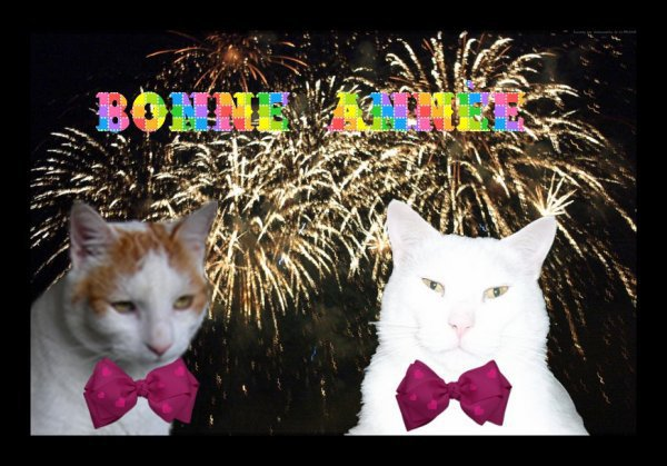 Excellente Année 2019......Bonheur et Santé .....♥