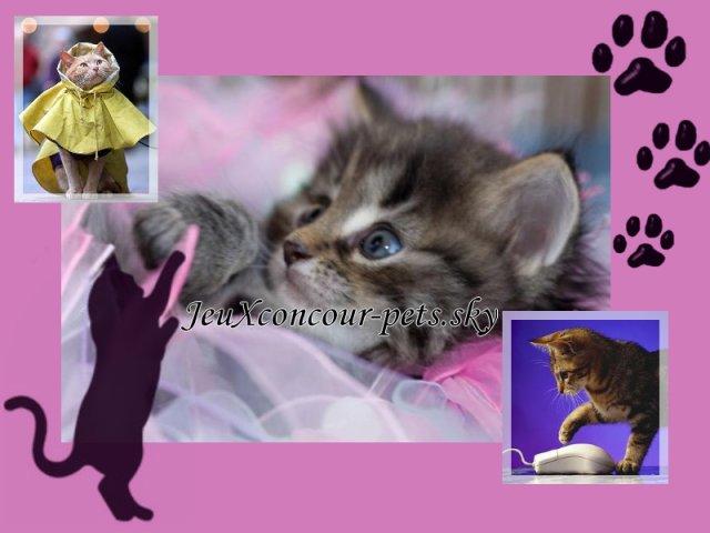 Blog de jeuXconcour-pets