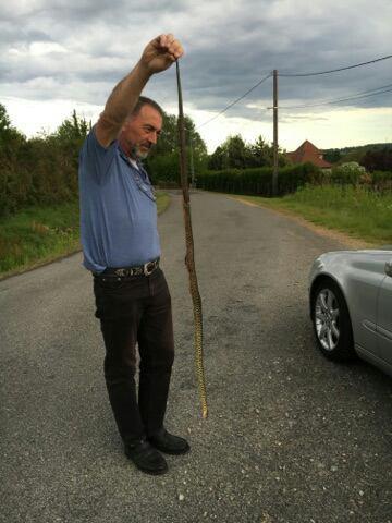 Serpent vert (cinglant) DSL