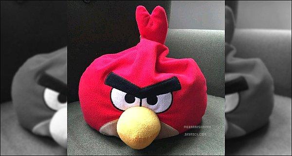 """16 Septembre 2015 : Shakira a posté une nouvelle photo sur Twitterde sa peluche Angry Birds Voici la légende : """"rencontrez mon nouvel ami Rojo. Shak"""". Eh oui la belle colombienne est l'invité star du jeu Angry Birds POP"""